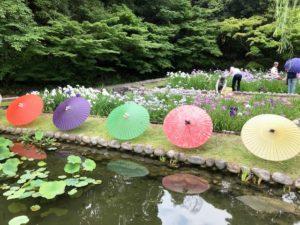 徳川園-菖蒲 (1)