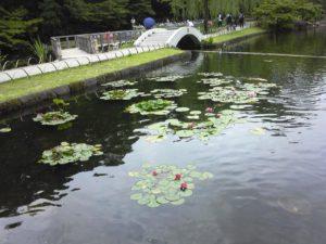 徳川園-菖蒲 (10)